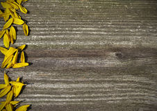 Board panel with yellow sunflower petals. Board wood panel with yellow sunflower petals Royalty Free Stock Photography