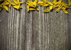 Board panel with yellow sunflower petals. Board wood panel with yellow sunflower petals Stock Image