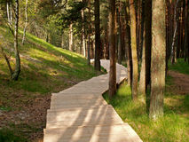 Board path in the coniferous wood Stock Image