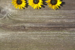 Board with sunflowers concept. Dark board with sunflowers concept Royalty Free Stock Photo