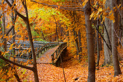 Board walk in autumn landscape Royalty Free Stock Image