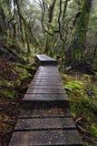 Board walk, Cradle Mountain National Park, Tasmania, Australia Royalty Free Stock Photos