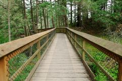 Board walk in forest. Hiking trail in rain forest at witty's lagoon regional park, vancouver island, bc, canada Royalty Free Stock Photography