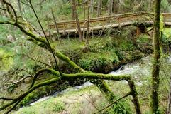 Board walk in forest Stock Photo