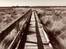 Board walk, Mcloughlins Beach, Victoria, Australia. The boardwalk at McLoughlins Beach near the pier. Wild life and fresh air. Gippsland Victoria Australia royalty free stock image