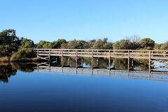 Board walk over the wetlands at Big Swamp Bunbury Western Australia in late winter. Stock Photos