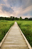 Board Walk Through Wetland. A board walk leads into a low area of the Minnesota River Valley in the Minnesota Valley National Wildlife Refuge royalty free stock photos