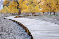 Board walkway in a national park Royalty Free Stock Photo