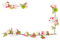 Boarder Of Crabapple Flowers Stock Image