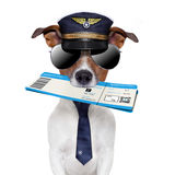 Boarding pass dog. With hat and tie Royalty Free Stock Photo