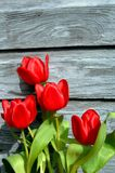 Boards brighten by red tulips Stock Photos