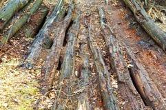Boards, decayed, old, old, weak, decrepit, wood, beams Stock Photo