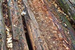 Boards, decayed, old, old, weak, decrepit, wood, beams Royalty Free Stock Photo