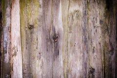 boards den gammala väggen Textur av träpaneler Bakgrund med karaktärsteckning Royaltyfri Fotografi
