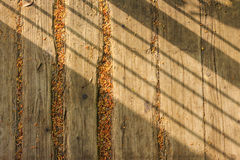 Boards with foliage and  shadow Royalty Free Stock Photos