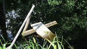 Boards frogs. Village pond upon fallen rotten boards quietly sitting group of frogs stock footage