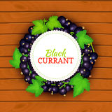 Boards wood background, border with round colored frame composed of black currant. Vector card illustration. Fruit label. Circle currant berries label fruit Royalty Free Stock Photography