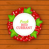 Boards wood background, border with round colored frame composed of red currant. Vector card illustration. Fruit label. Circle currant berries label fruit and Royalty Free Stock Photo