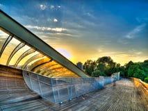 boardwalk över soluppgångtreetop Arkivbilder