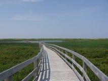 boardwalk över våtmarker Royaltyfria Bilder
