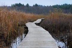 Boardwalk ścieżka fotografia royalty free