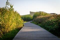 Boardwalk ścieżka Wśród roślinności obrazy royalty free
