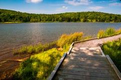 Boardwalk ślad okrąża Świerkowego Gałeczka jezioro, Zachodnia Virginia Zdjęcie Royalty Free