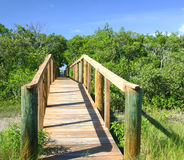 Boardwalk - 2. Boardwalk under and through the mangroves to the International Waterway in southwestern Florida royalty free stock photography