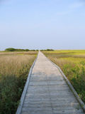 Boardwalk. Through the salt marsh royalty free stock images
