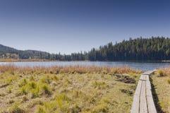 Boardwalk across grassy lake shore Stock Images