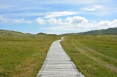 Boardwalk across green fields