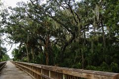 Big Talbot Island State Park, Florida, USA. A boardwalk across marshy ground and lush tropical woods with abundant Spanish moss draping branches of live oak royalty free stock photos