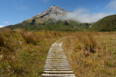 Boardwalk across swamp near mount Taranaki Stock Image