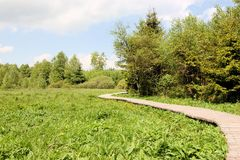 Boardwalk across swampland, Rhoen mountain range Stock Images
