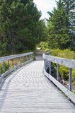 Boardwalk in Algonquin Park Stock Photo