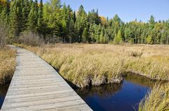 Boardwalk in Algonquin Park Ontario Stock Photo