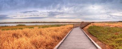 Boardwalk along the wetland and marsh at the Myakka River State. Park in Sarasota, Florida, USA royalty free stock images