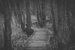 Boardwalk Amidst Trees in Forest Stock Photography