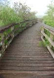 Boardwalk in Anhinga Trail. Boardwalk with Early Morning Fog in Anhinga Trail in Everglades National Park, Florida royalty free stock photography