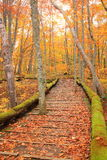 Boardwalk in autumn forest Royalty Free Stock Photos