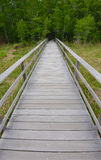 Boardwalk through beautiful cypress forest in Corkscrew Swamp Sa Royalty Free Stock Image
