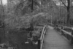 Boardwalk in Black and White Stock Images
