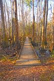 Boardwalk into a Bottomland Forest Stock Images