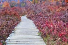 Boardwalk cmentarzy Pólnocna Karolina Śródpolna jesień Fotografia Royalty Free