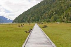 Boardwalk Through a Coastal Estuary Royalty Free Stock Image