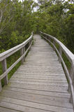 Boardwalk through coastal forest. A boardwalk winding through a forest located near Cape Hatteras, NC Royalty Free Stock Photo