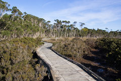 Boardwalk conservation. A boardwalk through mangrove for environmental conservation Royalty Free Stock Images