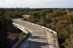 Boardwalk for conservation. A boardwalk through mangrove for environmental conservation Royalty Free Stock Image