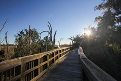 Sunset Stroll through Cradle Creek Nature Preserve. The boardwalk through Cradle Creek Nature Preserve overlooks the marsh at sunset royalty free stock photography