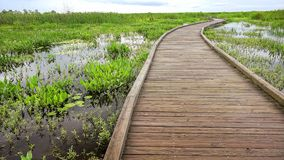 Boardwalk curves through a marsh and wetlands in Louisia. Boardwalk curves through a marsh and wetlands along Pintail Wildlife Drive at Cameron Prairie National stock images